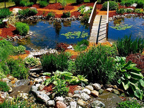 Выбор растений для водоема