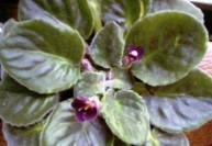 Защита комнатных растений