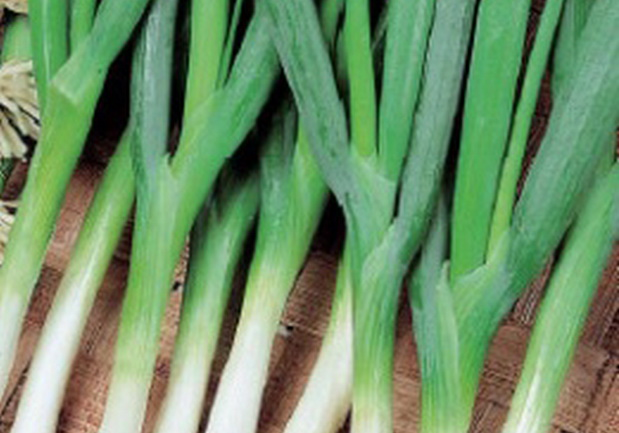 Сорт лука батуна: Апрельский