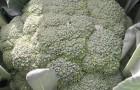 Сорт капусты брокколи: Айронмен f1