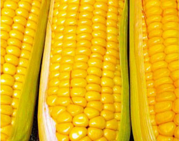 Сорт кукурузы сахарной: Бонус