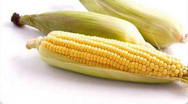 Сорт кукурузы сахарной: Боулинг