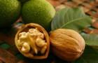 Сорт ореха грецкого: Дагестанский