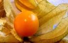 Сорт физалиса: Десертный