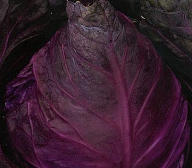 Сорт капусты краснокочанной: Фаберже