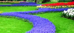 Форма цветников