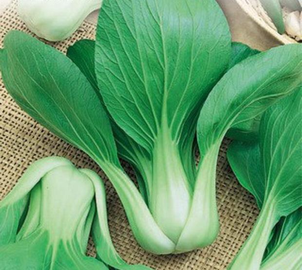 Сорт капусты китайской: Голуба   f1