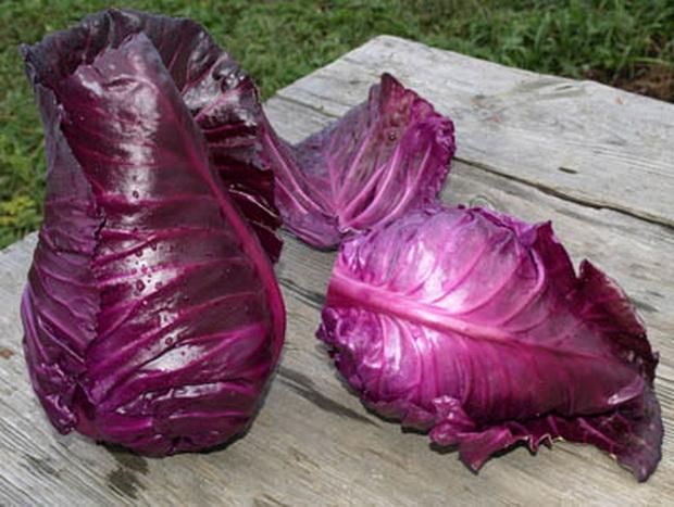Сорт капусты краснокочанной: Калибос