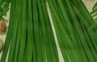 Сорт лука слизуна: Карлик