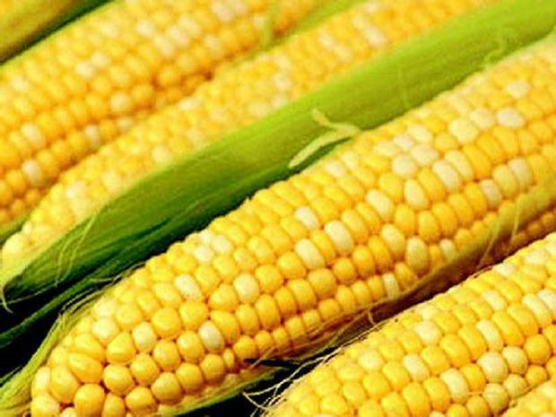 Сорт кукурузы сахарной: Краснодарский сахарный 280 св