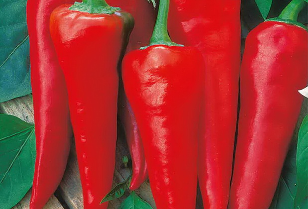 Сорт перца острого: Красный толстяк
