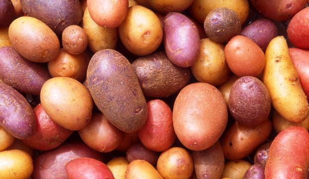 Лучший краситель будут делать из картошки