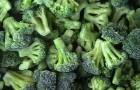 Сорт капусты брокколи: Монтерей f1