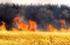 Обработка огнем - новый метод борьбы с сорняками
