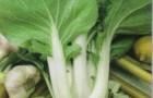 Сорт капусты китайской: Пава