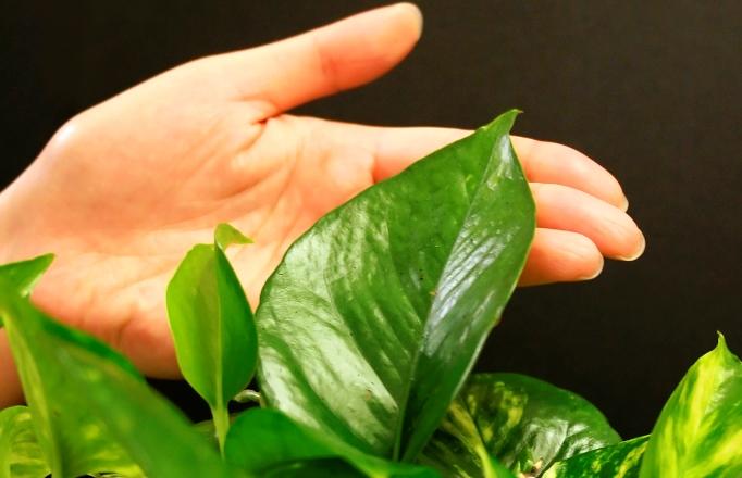 Погладьте растения, чтобы сделать их сильнее