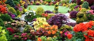 Различные виды цветников