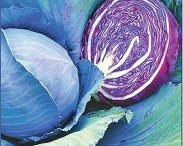 Сорт капусты краснокочанной: Ребол   f1