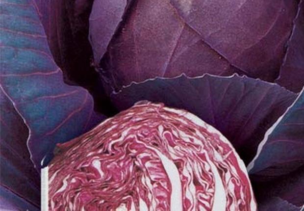 Сорт капусты краснокочанной: Рубин мс