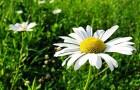 Семь трав, которые помогут побороть бессонницу и тревожность