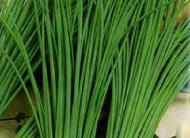 Сорт лука шнитта: Сиреневый звон