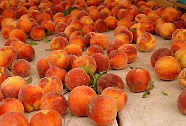 Сорт персика: Ставропольский розовый