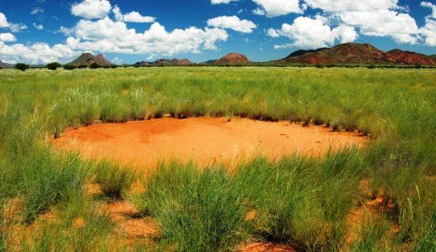 Таинственные «круги фей» в Африке - это проделки растений