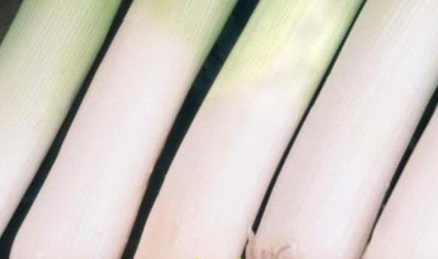 Сорт лука порея: Танго