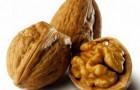 Сорт ореха грецкого: Урожайный
