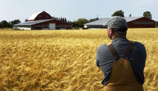 В будущем все горожане станут фермерами