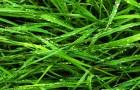 Вместо удобрении на полях будут сажать траву