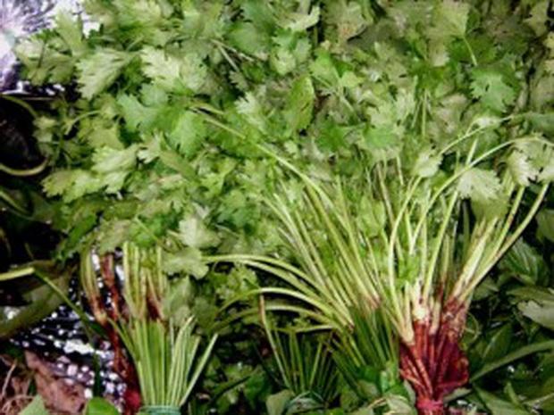 Сорт кориандра: Восточный аромат