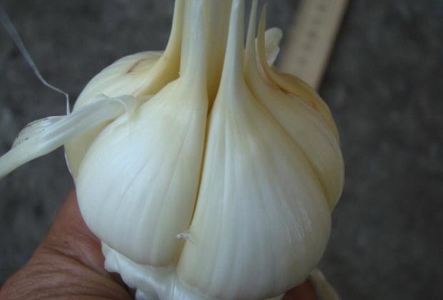 Сорт чеснока: Демидовский