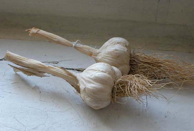 Сорт чеснока: Дунганский местный