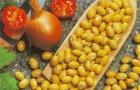 Сорт фасоли: Гелиада