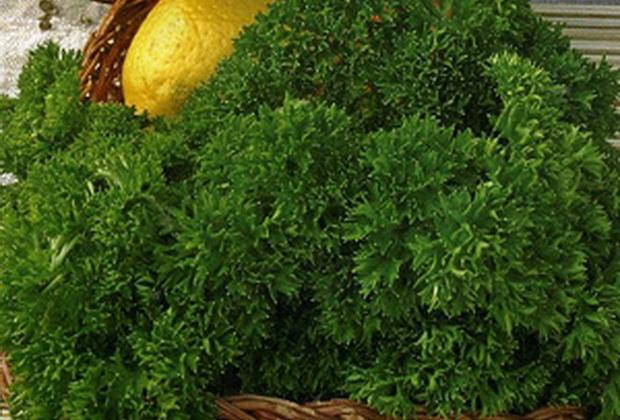 Сорт петрушки: Изумрудные кружева