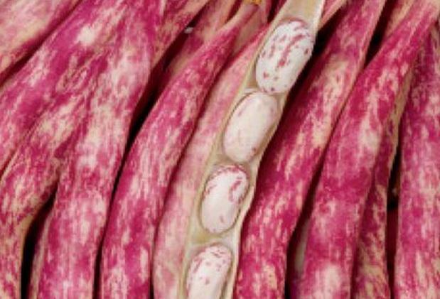Сорт фасоли: Ламбада