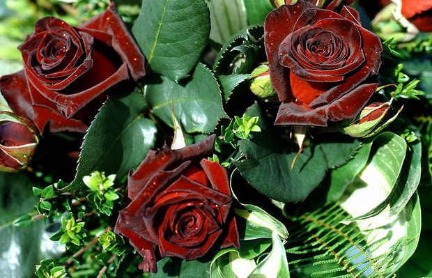 Сорт розы: Мейкофум