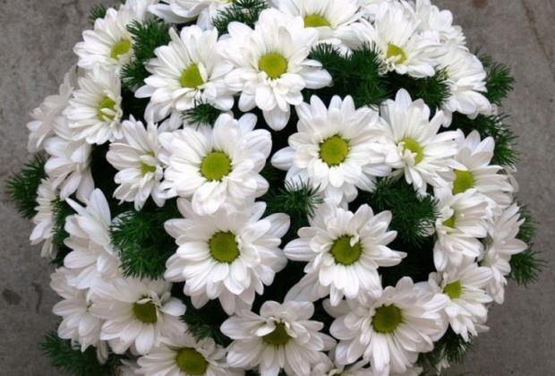 Сорт хризантемы: Полянка