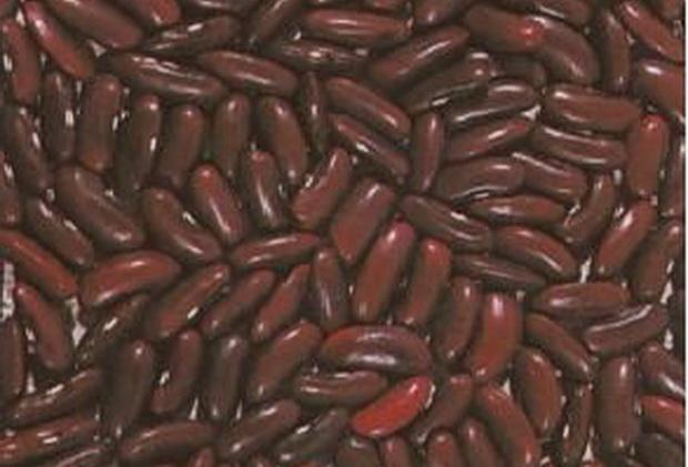 Сорт фасоли: Рубин