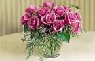 Сорт розы: Солярис