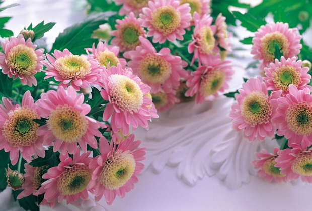 Сорт хризантемы: Страна айгуль