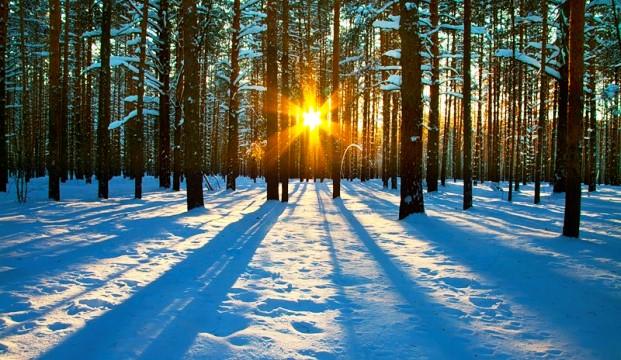В чем кроется опасность теплой зимы