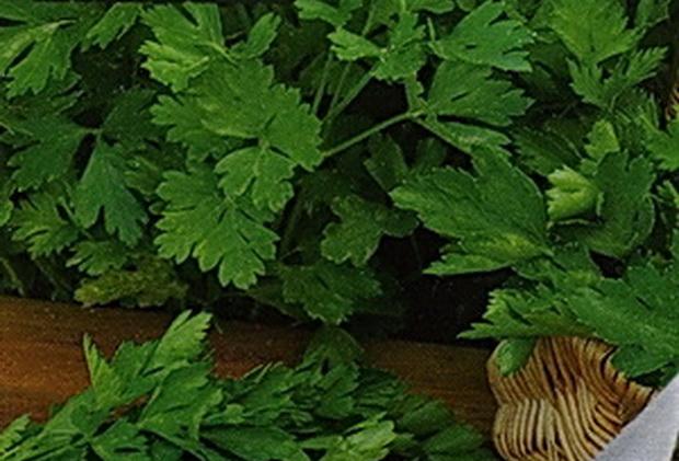 Сорт петрушки: Витаминная