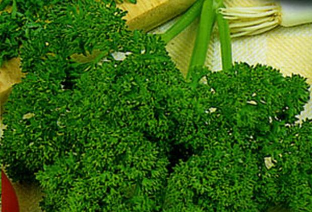 Сорт петрушки: Зеленый жемчуг