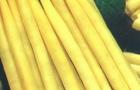 Сорт фасоли: Зинаида