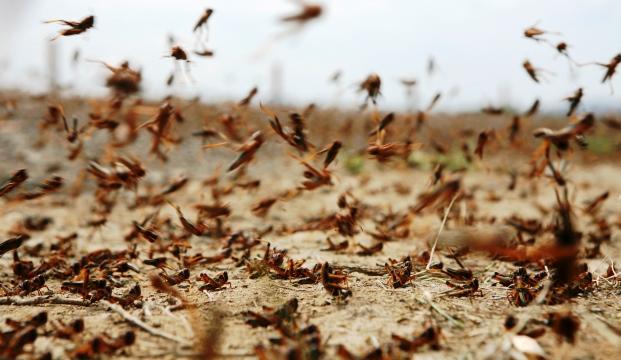 Где произойдет нашествие насекомых вредителей?
