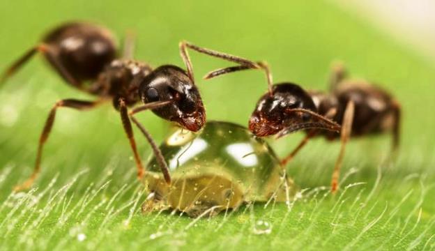 Почему муравьи больше не могут помогать растениям