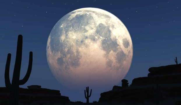 Почему не посадить собственный огород на Луне?