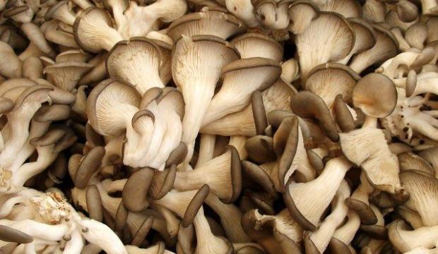Подготовка грибов к переработке
